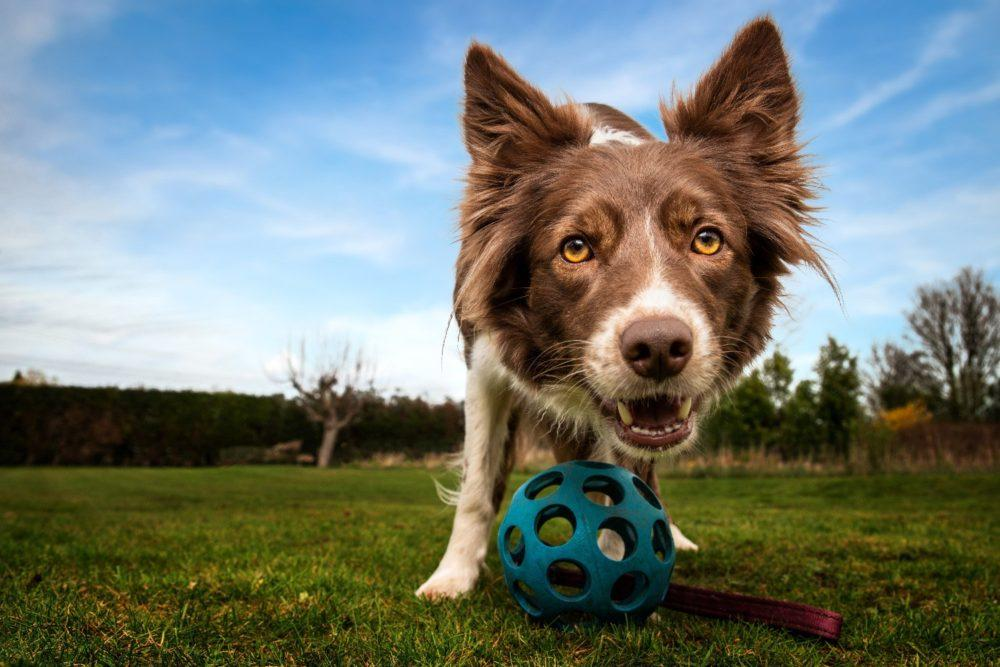 Locally Owned Dog Fencing Denver, Colorado and the Front Range